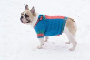 Вязание для собак на сегодняшней день очень актуальная тема.