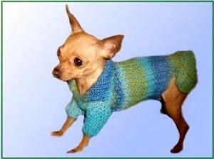 У меня новый фотоальбом - одежда для собак.  Хотите узнать больше- заходите.  И несколько фоток здесь:). той-терьер.