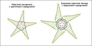 starfishesschema2